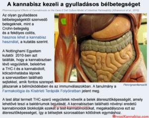 Inflammatory bowel disease and cannabis - HUN
