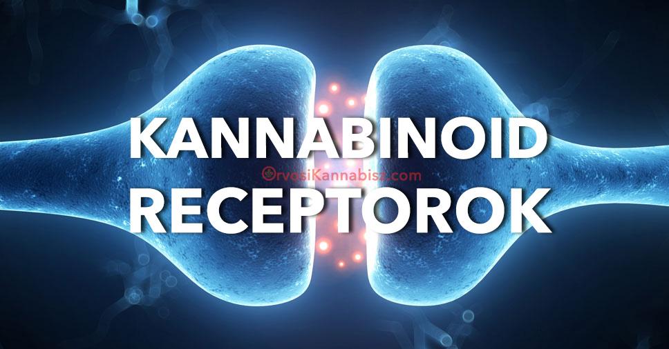 cannabinoidreceptors - HUN