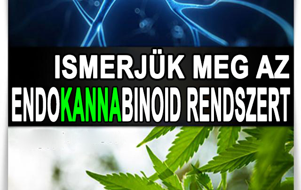 endocannabinoid system2 - HUN