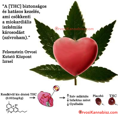 THC heart attack - HUN