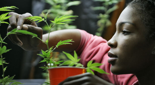 Growing Your Own Cannabis