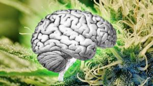 Cannabis-Epilepsy
